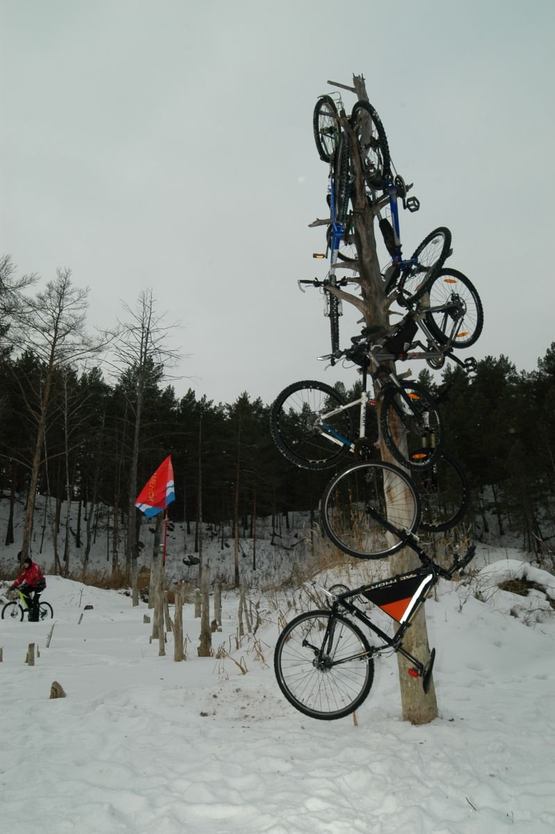 велоёлка 2012
